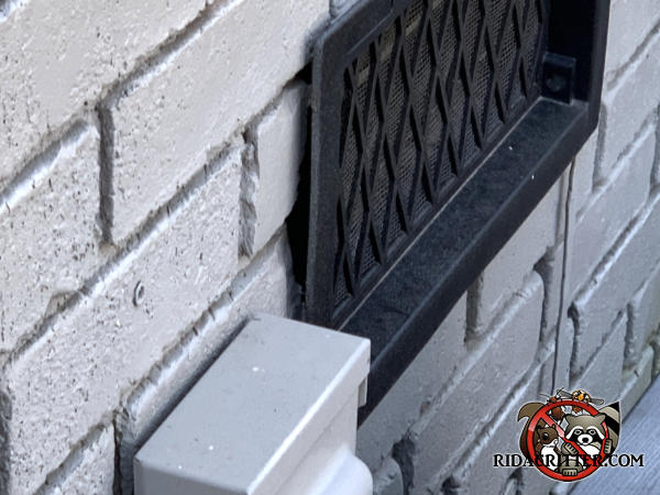 Gaps between a foundation vent and the brick wall allowed mice to get into a house in Chattanooga Tennessee