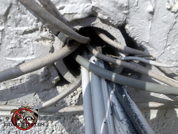 Gap between many wires passing through a conduit through the foundation needs to be sealed to exclude mice from an Adairsville Georgia home.