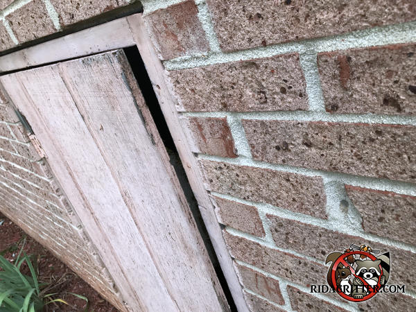The wooden crawl space door is ajar which created a half inch gap that allowed mice to easily get into the crawl space of a house in Conyers Georgia