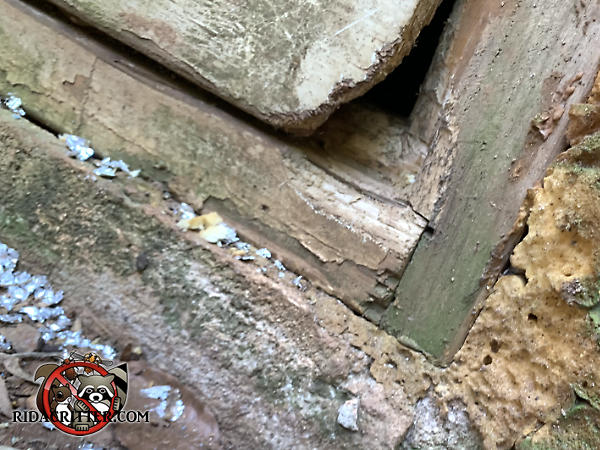 Mice gnawed a hole through the lower right corner of a plywood crawl space door to get into the crawl space of a house in Roswell Georgia.