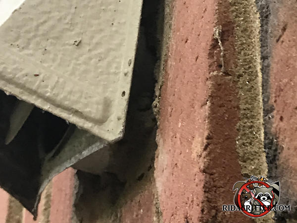 The dryer vent is sticking out about an inch from the brick wall and its flapper door is sprung which allowed mice into a house in Atlanta.