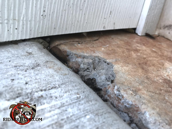 Quarter inch gap under the siding at an expansion joint allowed mice into a house in Flowery Branch Georgia