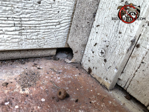 A one inch wide by quarter inch high gap at the end of the garage door weather seal and a gnawed section of trim allowed mice into the garage of a house in Hiram Georgia