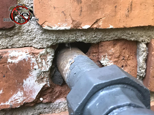 Poorly sealed gap around a gas pipe where it passes through the brick wall of a house in Smyrna Georgia allowed mice to get into the house.
