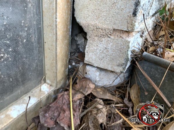 Gap in the bricks by a foundation window through which mice got into a house in Atlanta