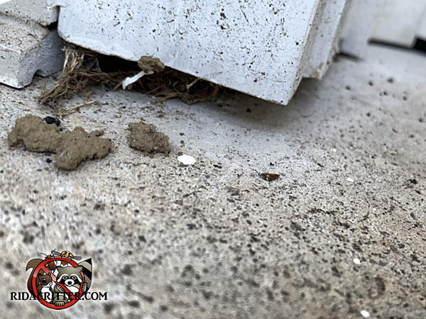 Quarter inch gap at the bottom of the wooden door trim of a house in Jasper Tennessee allowed mice to get into the house