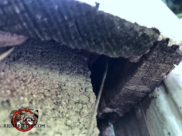 Roughly half inch gap between the foundation and the cedar siding of a house in Kennesaw Georgia allowed mice to climb up into the house