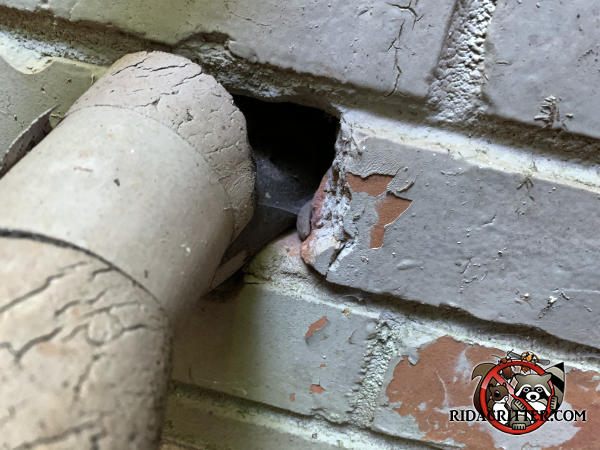 Mice climbed up the insulated air conditioning line and through a roughly quarter sized gap where it passes through the brick wall to get into a house in Atlanta