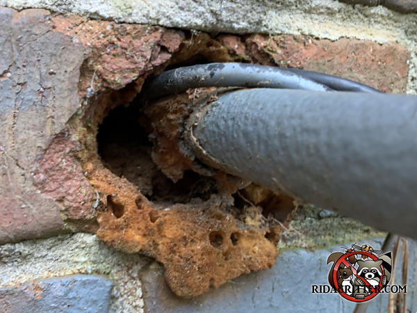 Mice chewed through insulating foam around a pipe through a brick wall that a homeowner used to try to keep mice out of a Roswell Georgia home.