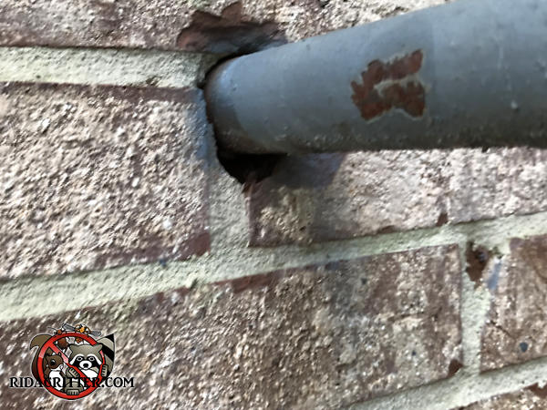 Quarter inch gap under a pipe where it passes through a brick wall allowed mice to climb the wall and get into a house in Stone Mountain Georgia.
