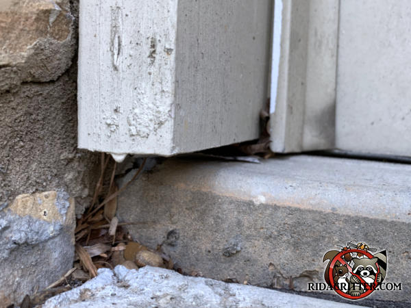 Dime sized hole in the mortar at the bottom of the door trim that mice used to get into a Roswell Georgia home is hidden by leaves and twigs