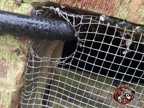 Handyman screened a foundation vent to keep mice out of a Stone Mountain Georgia home but mice gnawed the screen around a wire passing through it.
