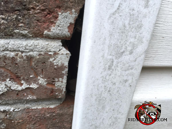 Half inch gap between the vertical vinyl siding trim and the bricks allowed mice to get into a house in Atlanta