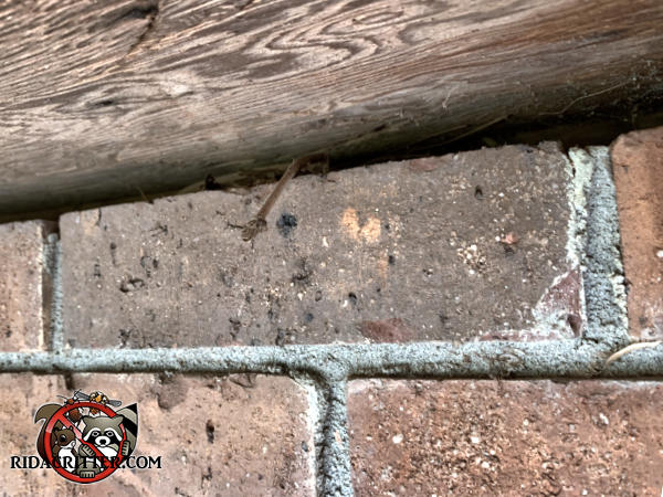 Three eighths inch gap between the brick foundation and the bottom of a plywood panel covering the porch joists allowed mice into a house in Atlanta.