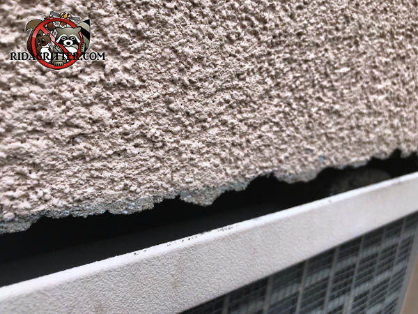 Irregular gap along the top edge of a foundation vent allowed mice to get into a house in Atlanta