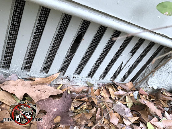Mice gnawed a hole through the screen behind a foundation vent cover to get into the crawl space of a Decatur Georgia home.