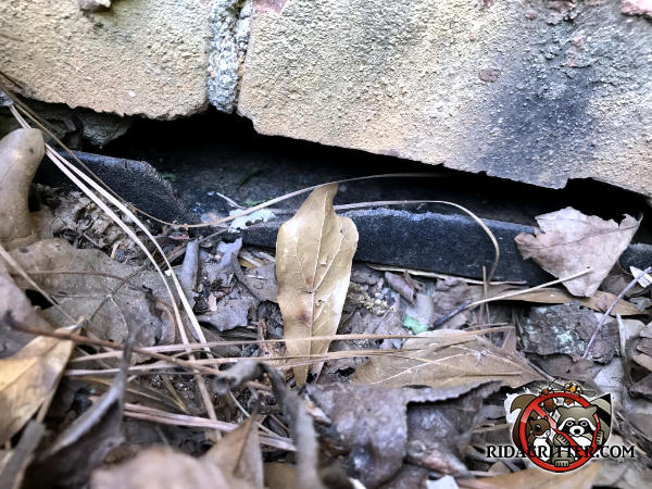 Mouse gnaw hole through the top of a poorly installed plastic foundation vent at a house in Woodstock Georgia