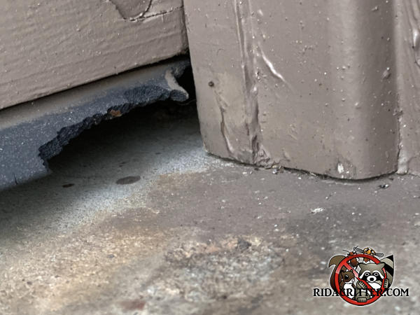 Mice gnawed about two inches of the garage door weather seal to get into the garage of a house in Bent Tree Georgia