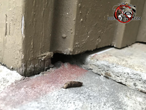 Mice got into a house in Bogart Georgia through a gap under the wooden trim near the doorway