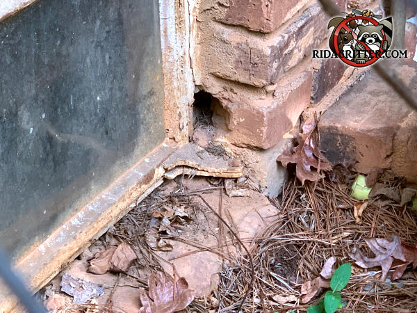 Part of a brick next to a basement window is broken off and mice got into the house through the hole