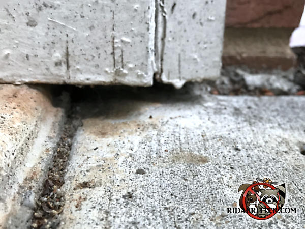 Small gap between the exterior trim and the pavement outside a house in Carrolton Georgia allowed mice into the house