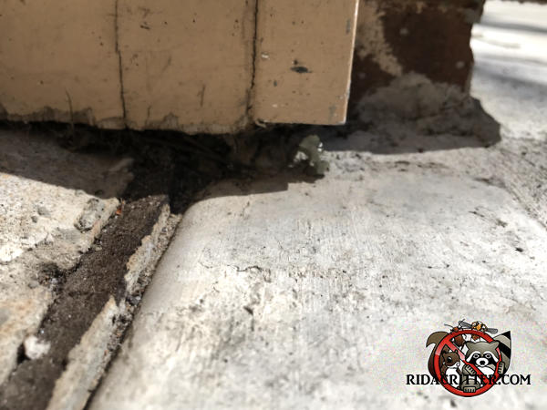 Gap under the siding over an expansion joint in the concrete allowed mice into a house in Dunwoody Georgia
