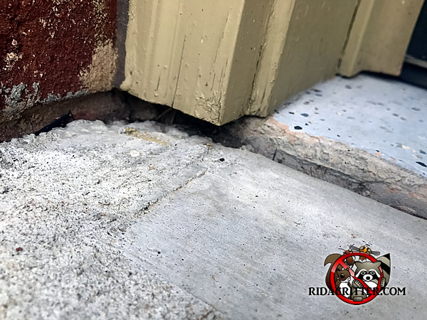 Mouse Extermination And Control Athens Georgia Area