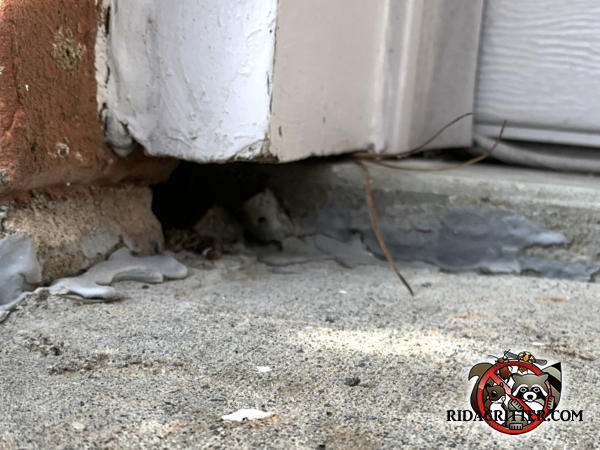 Mice got into the house through a gap in the mortar under the lowest row of bricks near the front door