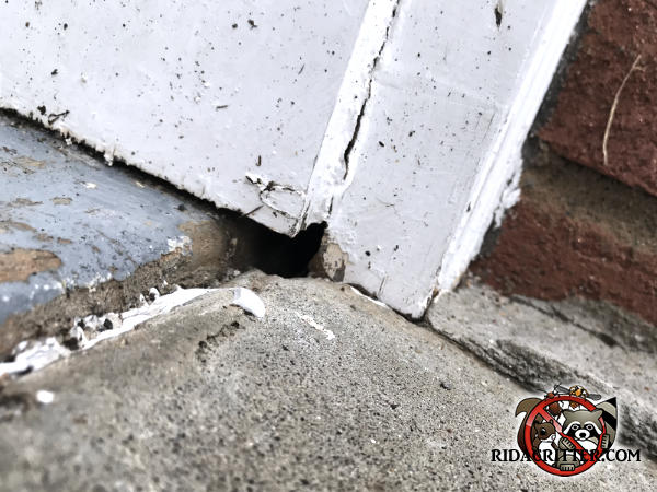 Dime sized mouse hole between the wooden trim and the concrete outside a brick house in Valdosta Georgia