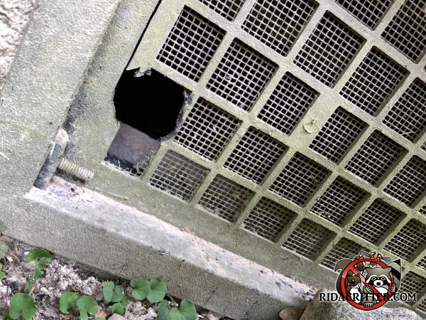 Mouse hole chewed through the screen behind a corner of a foundation vent on a house in Atlanta