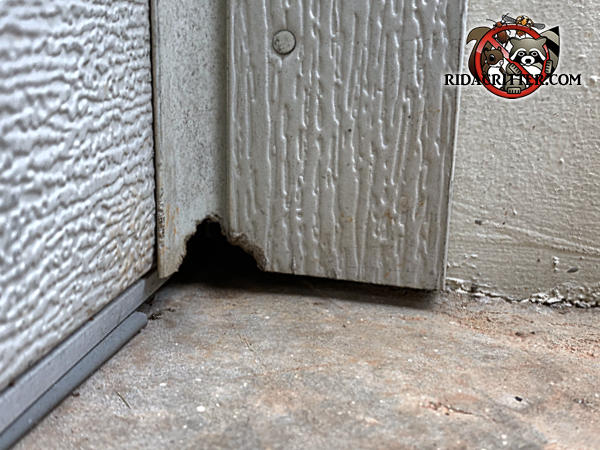 Mouse hole gnawed through the vinyl garage door trim outside a house in Watkinsville Georgia