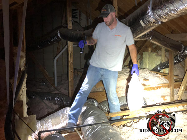 Man walking in the attic of a house in Newnan Georgia inspecting for mice with a flashlight