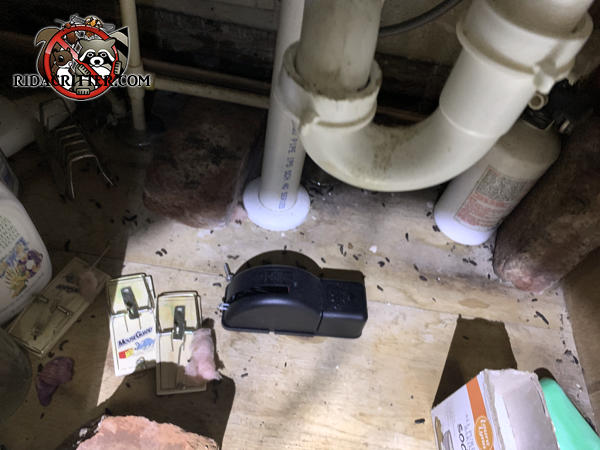 Mouse droppings and various kinds of mouse traps under the kitchen sink of a house in Atlanta