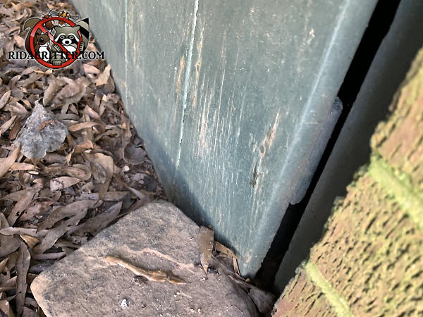 The homeowner set a rock against the crawl space door to try to keep it closed and keep mice out of a house in Jonesboro Georgia.