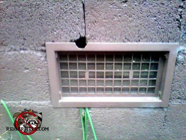 Mouse Extermination And Control Macon Albany Valdosta Georgia