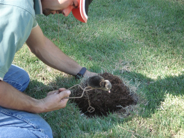 Backyard Hill Removal :  removal and control il animal control animal removal aallanimalcontrol