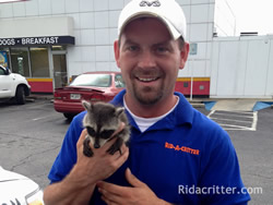 Animal control specialist holding a baby raccoon