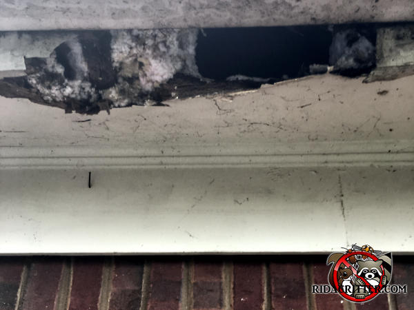 Raccoons tore an irregular hole about three feet across through the thin plywood soffit panel and the wooden fascia of a house in Dunlap Tennessee