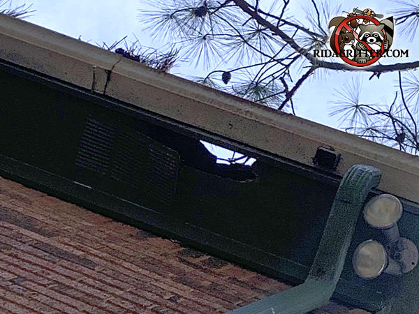 Raccoons tore holes through both the soffit panel and the roof so the hole goes right through