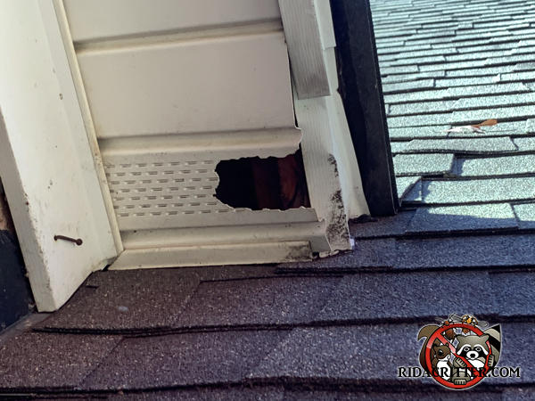 Raccoons tore a hole through the soffit panel and bent the soffit trim to get into the attic of a house in McDonough Georgia.