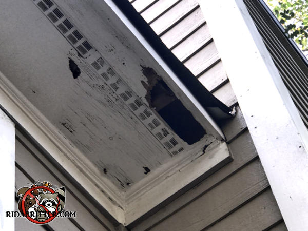 Rectangular raccoon hole about five by twelve inches in the soffit panel of a house in Atlanta