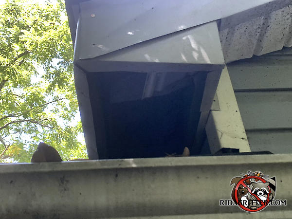 The soffit panel of a house in Atlanta is missing because raccoons either pulled it down from the soffit to get into the house, or collapsed it under their weight.