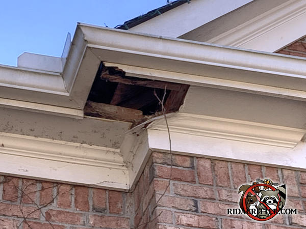 Approximately twelve inch by sixteen inch piece of the soffit panel was torn off by a raccoon