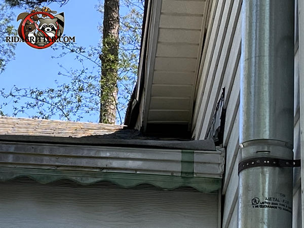 The soffit is collapsed onto the roof at a junction point due to water damage and the weight of raccoons in the attic of an East Point Georgia home.