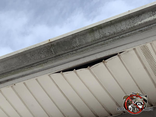 An 18 inch section of soffit panel on a Fayetteville Georgia home is sagging due to the weight of raccoons that were in the soffit