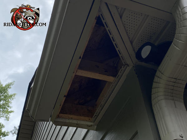 Raccoons caused the soffit panel of a house in Hogansville Georgia to fall out of the soffit by walking on top of it.