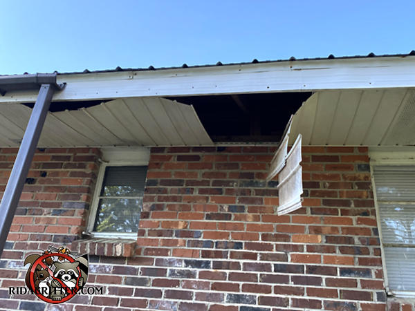Most of the soffit panel of a house in Jackson Georgia is hanging down because it collapsed under the weight of raccoons in the attic.