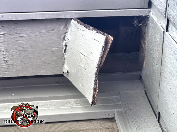 A piece of soffit panel about a foot square at a house in jasper Georgia that a raccoon collapsed by walking over it