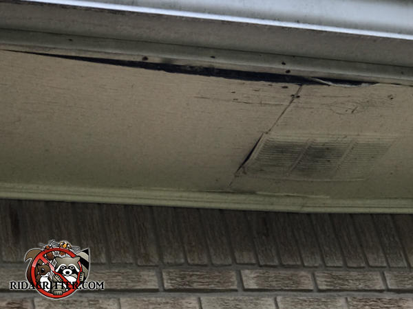 The soffit panel of a house in Lilburn Georgia is sagging because of the weight of raccoons running along it in the attic