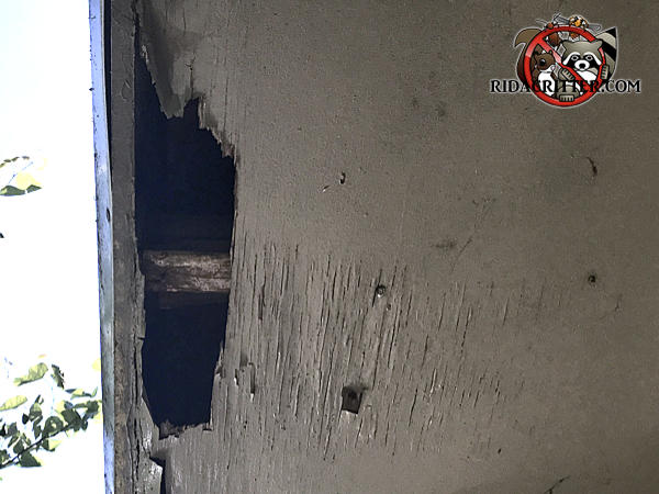 Raccoons tore a hole about five inches by twelve inches in the soffit panel of a house in Marietta Georgia